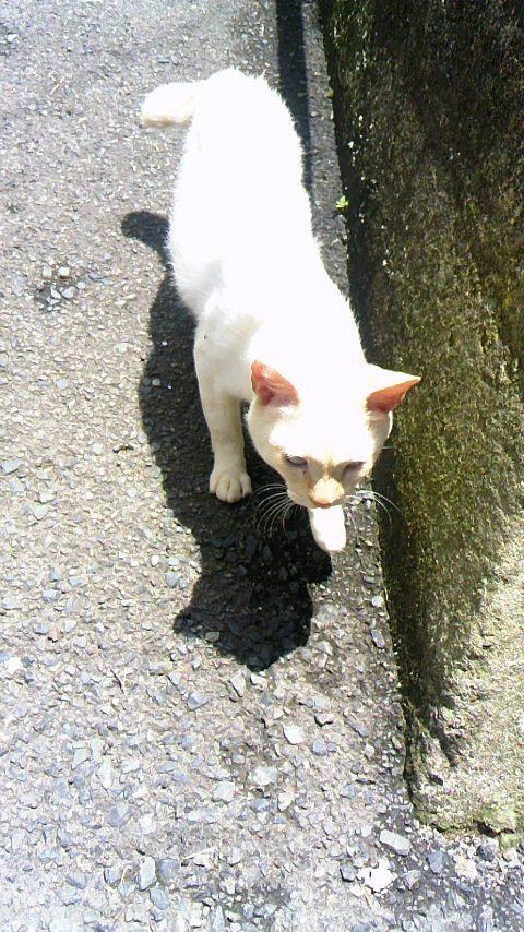 男木島坂道の猫